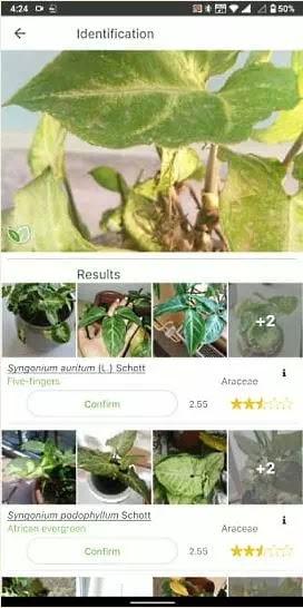 aplikasi untuk mengidentifikasi tanaman-3