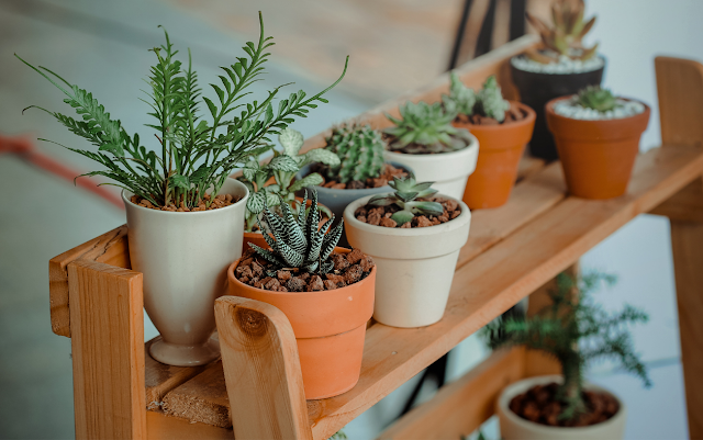 10 Indoor Activities | Gardening