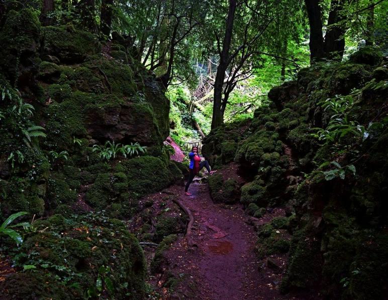 woodland walks near london