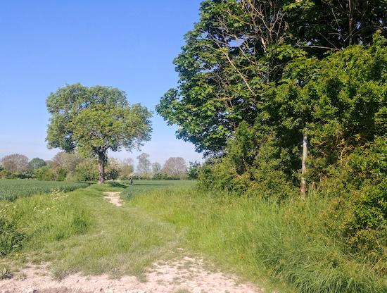 Ashwell bridleway 20 - point 4
