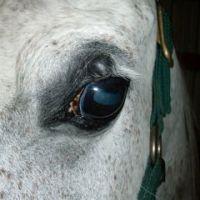 lovak felállítása