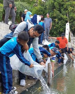 200 Ribu Ikan Patin Kembali Penuhi Cimanuk