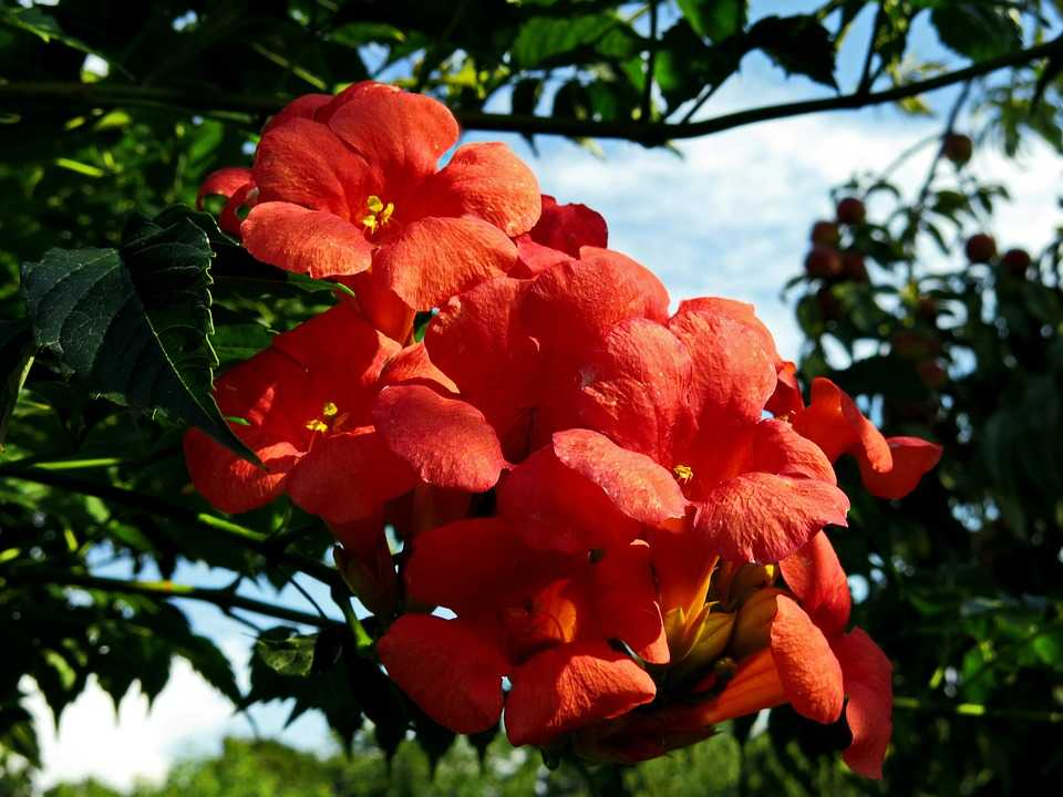 यह है दुनिया के 6 सबसे विचित्र पौधे  - Top 6 Mysterious Flowers in The World in Hindi