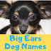 [TOP] Big Ears Dog Names