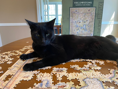 Photo of a black cat sitting on a partially completed puzzle. She looks to have quite an attitude.