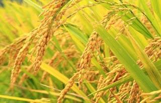 usaha bidang pertanian yang menjanjikan