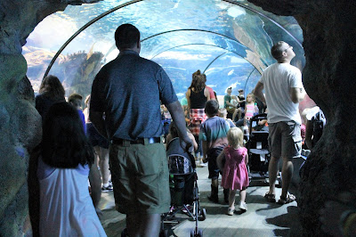 Omaha's Henry Doorly Zoo Scott Aquarium Shark Tunnel