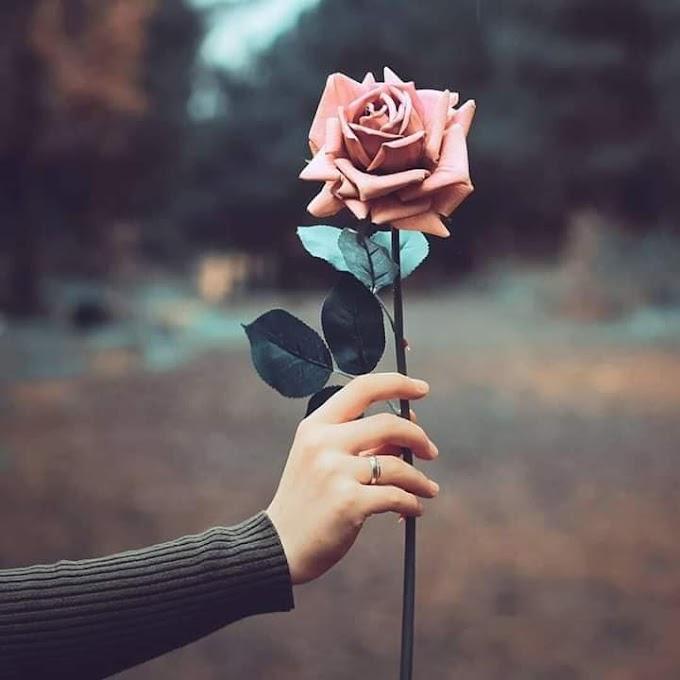 Aku Bukan Bunga Mawar