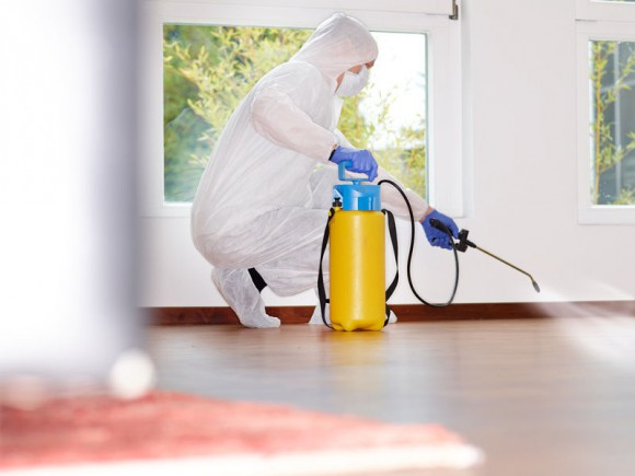 What Type Of Services Can Be Expected Of From Pest Control Companies?