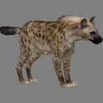 hyenna in spanish