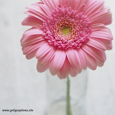 Flower Captions,Instagram Flower Captions,Flower Captions For Instagram