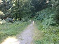 Durch die Kernzone Plättig des Nationalparks Schwarzwald zur Badener Höhe
