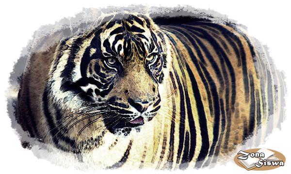 Contoh Descriptive Text Hewan Harimau Artinya