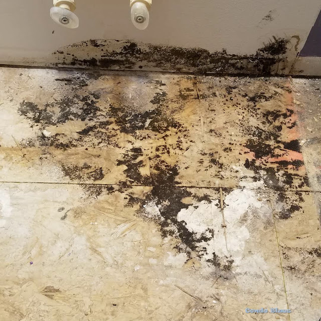what to do if you find black mold in a bathroom