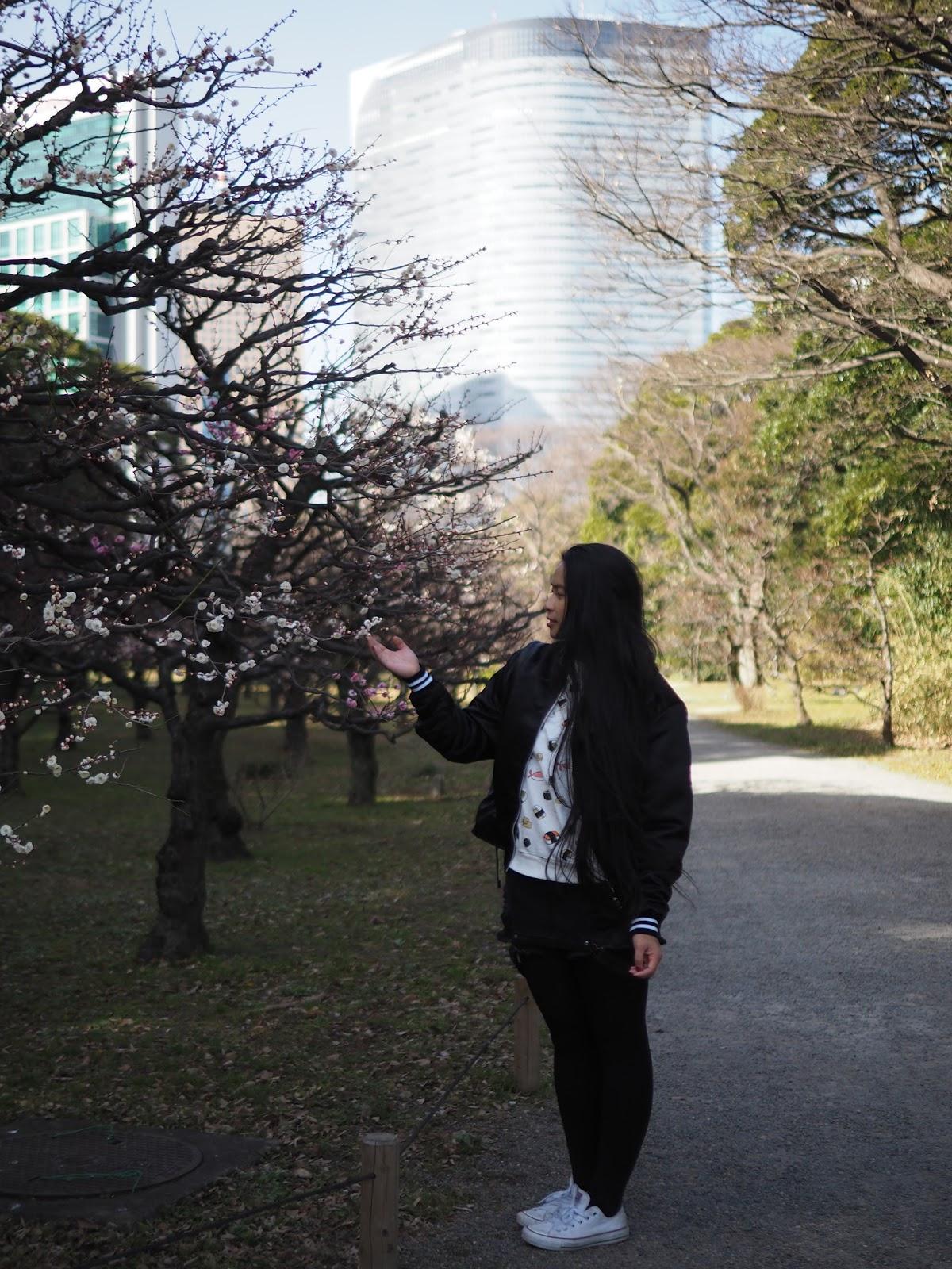 Japan tokyo chuo sakura flowers