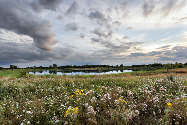 Evening photogrphy at RSPB nature reserve with wildflowers in Cambridgeshire by Martyn Ferry Photography