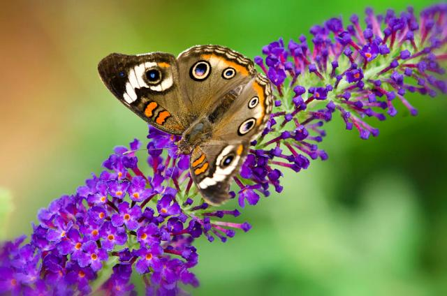 Pic Of Flowers With Butterfly