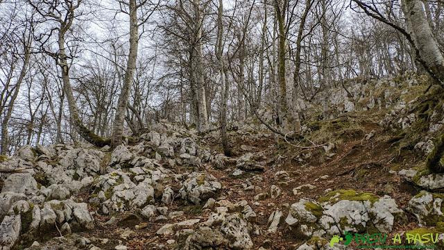 Bosque y caliza hacia Vega de Ciarda