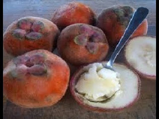 manfaat-buah-bisbul-bagi-kesehatan,www.healthnote25.com