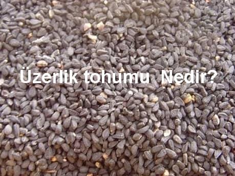 Üzerlik tohumu  Nedir?  Ne  İçin  Kullanılır?