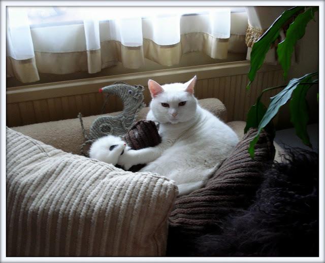 white cat, cute cat, nesting cat