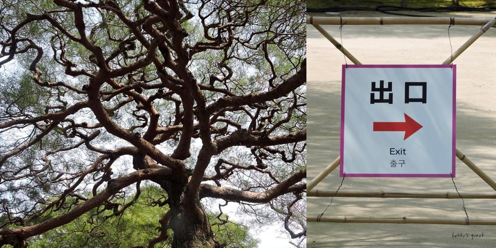 Heian Shrine Garden in Kyoto by betitu's quest