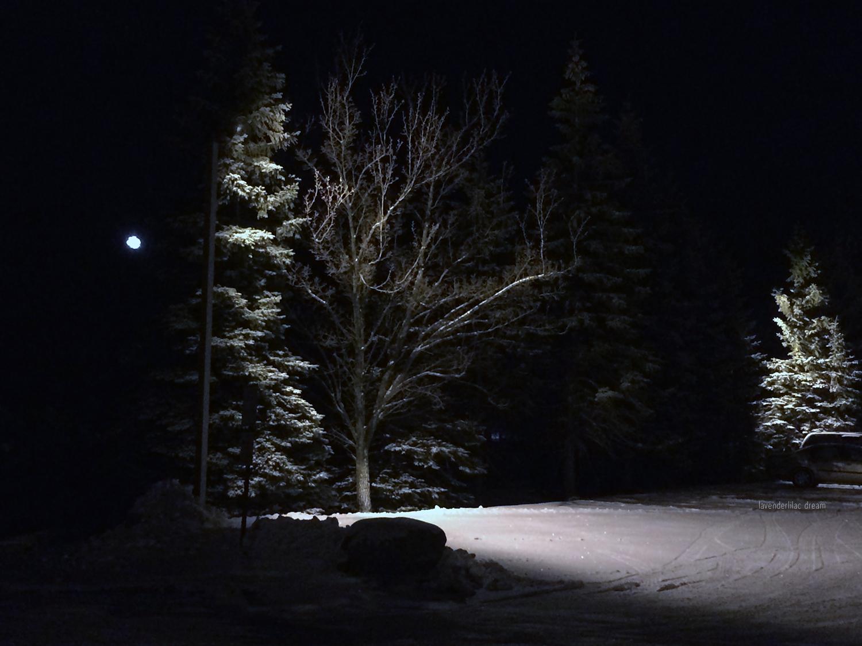 Chateau Resort, moon, trees, night
