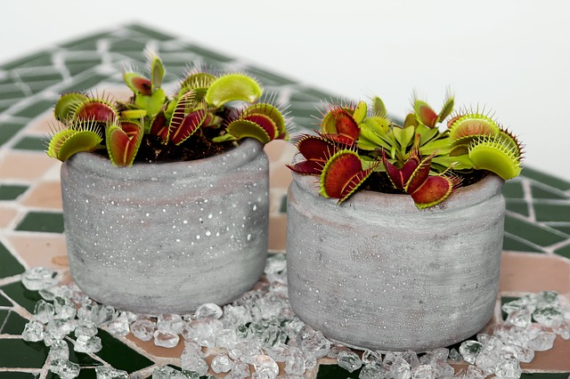 carnivores plants that eat insects