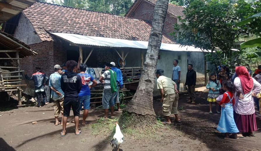 Sapi Curian Ditemukan di Kandang Lim, Warga Desa Tunjung