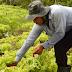 POBREZA: Câmara dos Deputados aprova auxílio a agricultores familiares