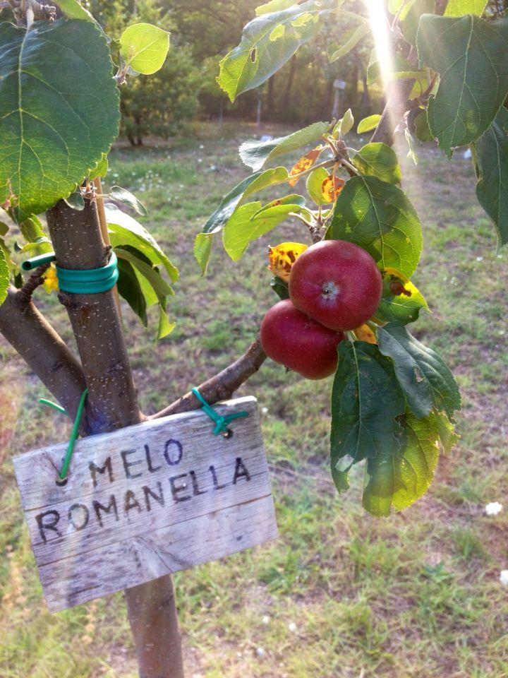 Noixlucoli onlus il giardino della memoria di lucoli for Piante antiche da frutto