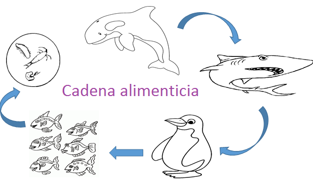 Cadena Alimenticia Acuatica Para Colorear Cadena