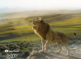 Lion King in Beja