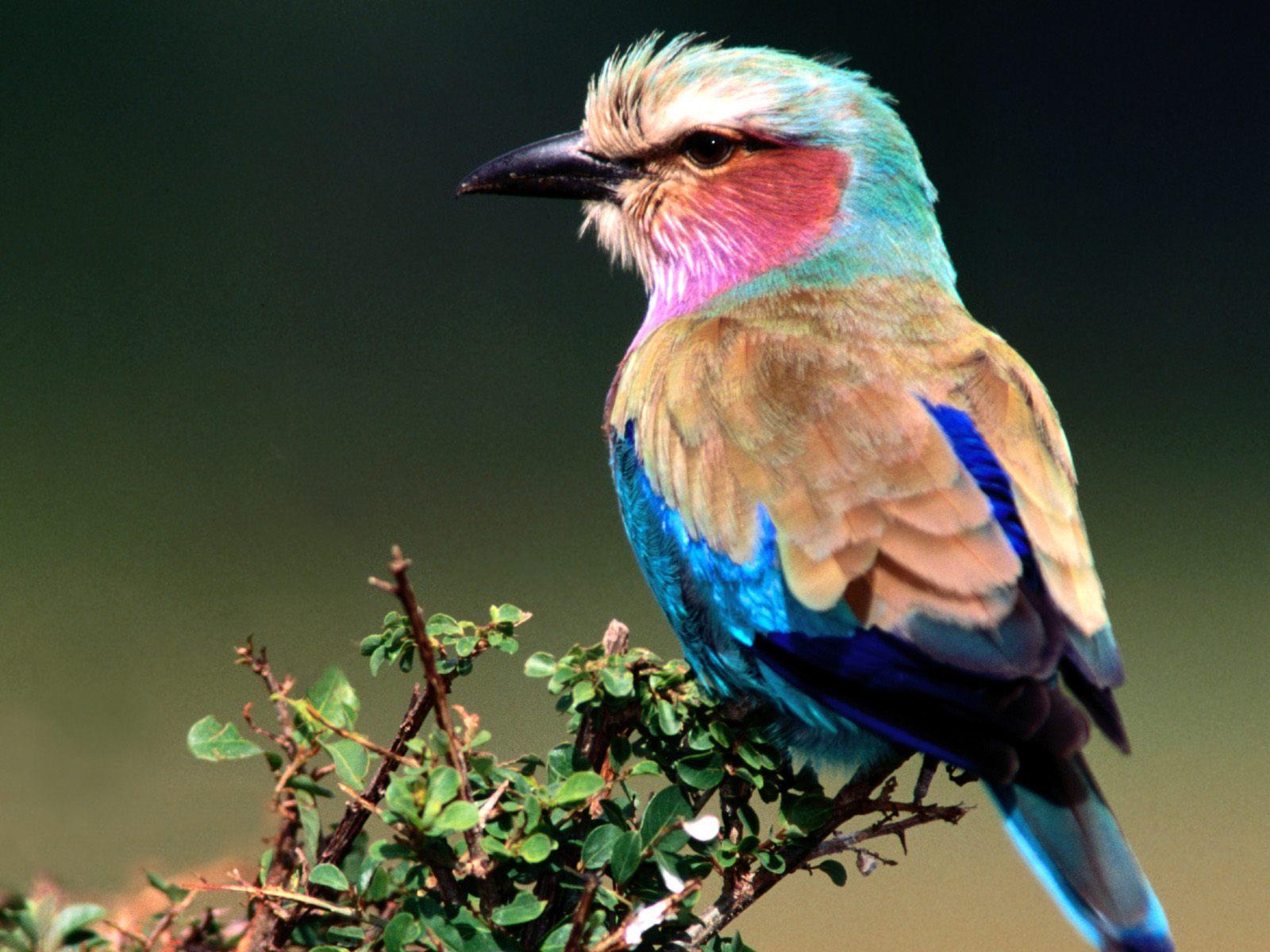 cool birds wallpaper - photo #33
