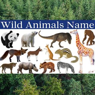 Wild Animals Name List In English