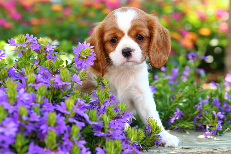 Common Plants Toxic To Your Dog Australian Dog Lover