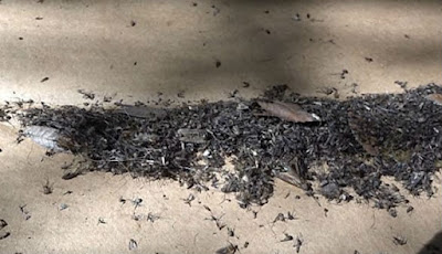 Hebat, Pria Ini Berhasil Bunuh 4.000 Nyamuk dalam Semalam