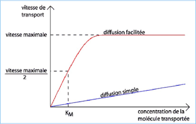 diffusion simple/facilitée