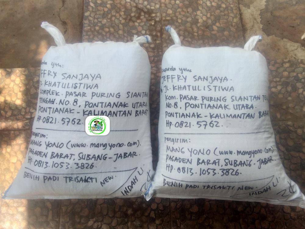 Benih pesanan JEFFRY SANJAYA Pontianak, Kalbar. (Setelah Packing)