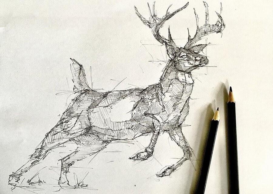 07-Deer-Brendan-www-designstack-co
