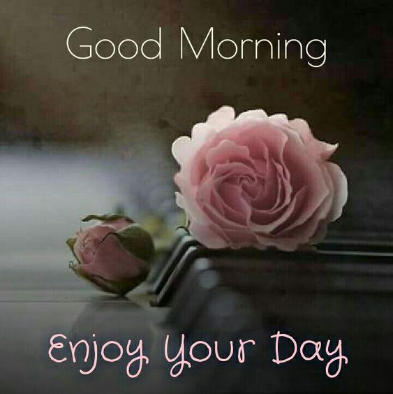 Romantic Good Morning Pink Flowers for Girlfriend Boyfriernd