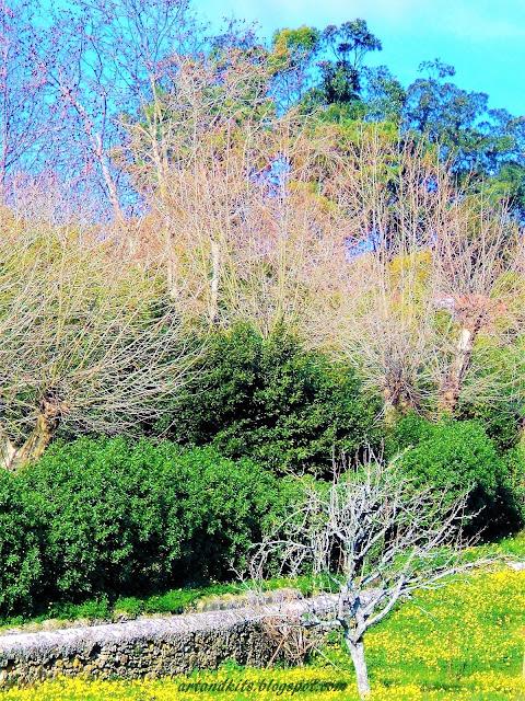Quando abro a minha janela... e este dia de Janeiro, me garante que lá fora, será Primavera... e a invernia... apenas um estado de alma passageiro... / When I open my window... and this day of January assures me that out there, will be Spring... and Winter... it is just a passing state of soul or something...