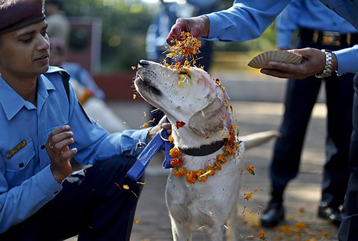 Dog, Nepal