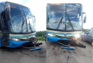 BA 646: Animais na pista provocam acidente com ônibus da Novo Horizonte