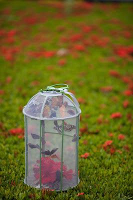 kandang perlindungan kupu