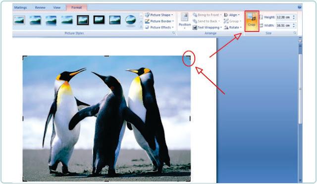 Cara Memotong Gambar Atau Crop Foto Di MS Word