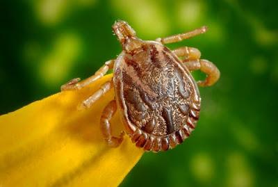 Justin Bieber Lyme Disease