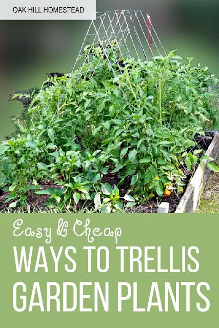 Grow vertically to save space and have healthier plants. You'll learn the benefits of using trellises in this post and find 5 easy and cheap ways to make them using stuff you already have. Easy ways to trellis tomato and other large vegetable plants!