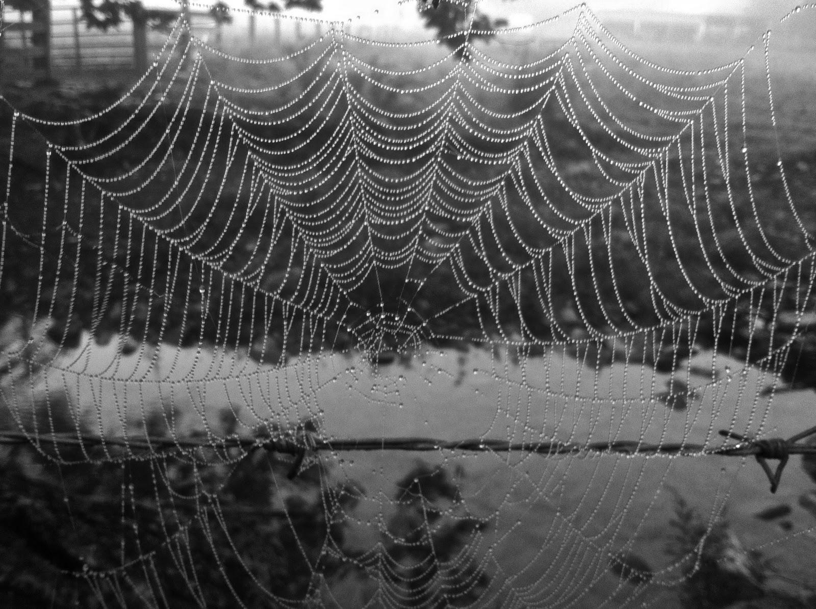 Spider Web Or Christmas Lights 9 16 11