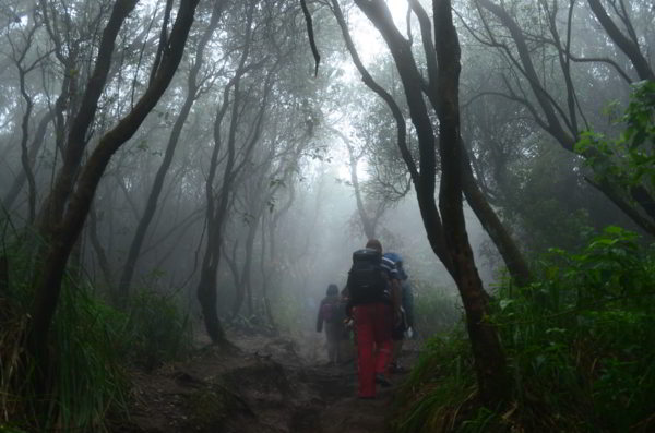 5 Hutan Angker Yang Ada Di Indonesia